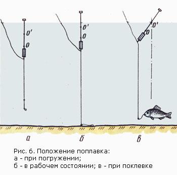 Пропорции поплавков